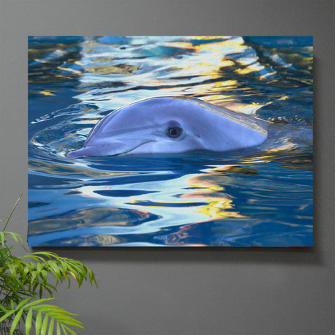 Lazy Swim Dolphin Wall Art