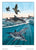 Morning Swim Dolphins & Pelicans Wall Art