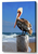 Morning Perch Pelican Wall Art - JWB Art Unlimited