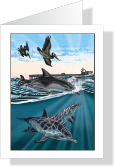 Morning Swim Dolphins & Pelicans Note Cards