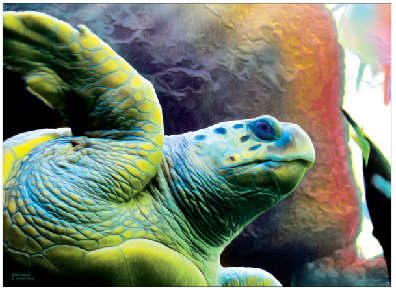 Still Cruisin' Sea Turtle Print - JWB Art Unlimited