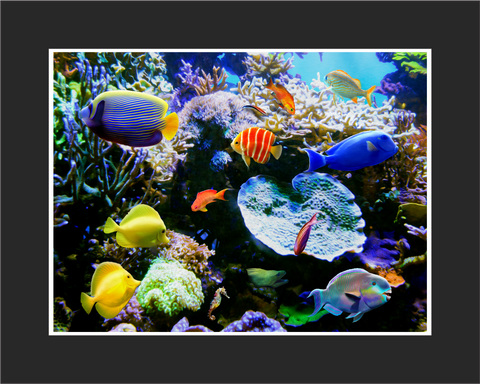 Tropic Wonder Tres Reef Wall Art - JWB Art Unlimited