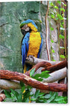 Lauren Macaw - JWB Art Unlimited
