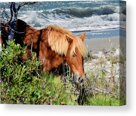 Pony Up - Chincoteague Ponies Wall Art