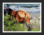 Pony up - Chincoteague Ponies Canvas Wall Art
