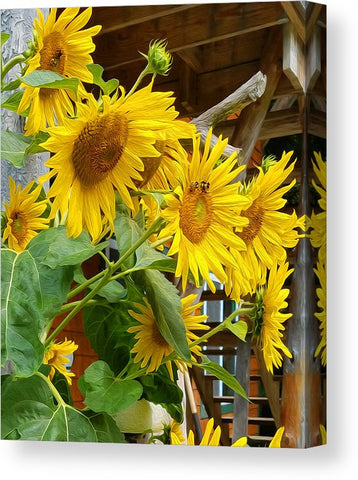 Sunny Bee Sunflower Wall Art