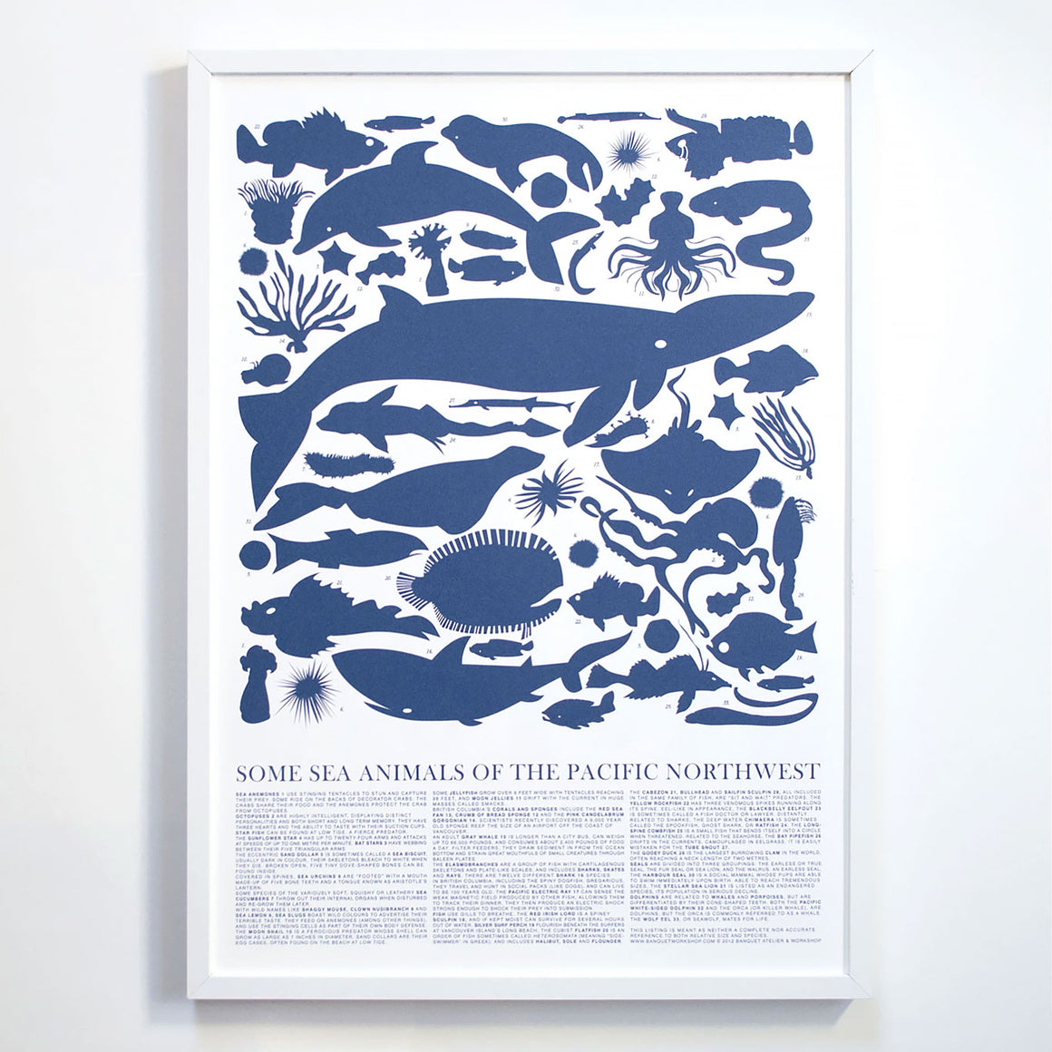Sea Animals of the Pacific Northwest Print