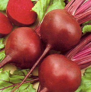 100+ Early Wonder Beet Seeds - Beta vulgaris