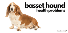 Border Collie Health Issues, Symptoms, and Treatment Options