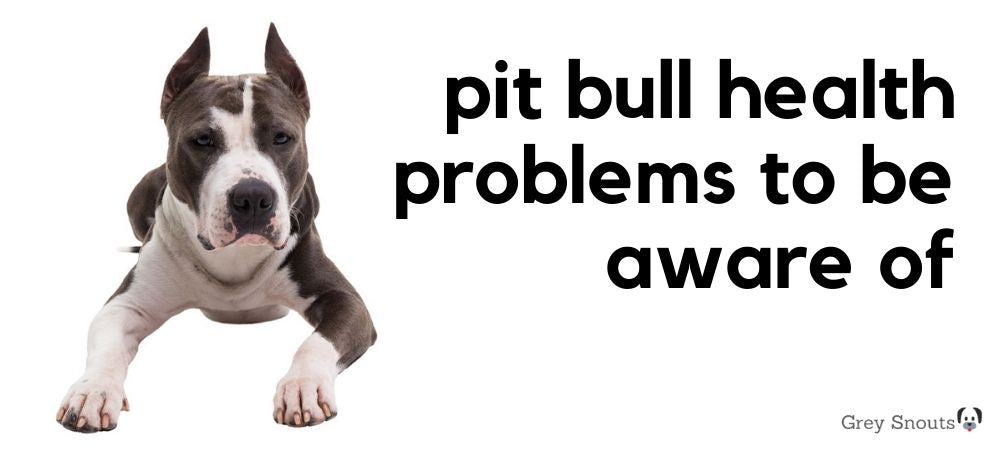 Pit Bull Terrier Health Problems