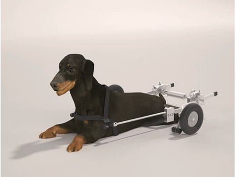 SitGo Dog Wheelchair - SMALL - (15-17