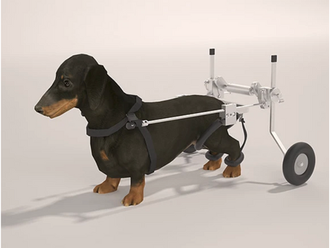 SitGo Dog Wheelchair - MEDIUM - (16-20