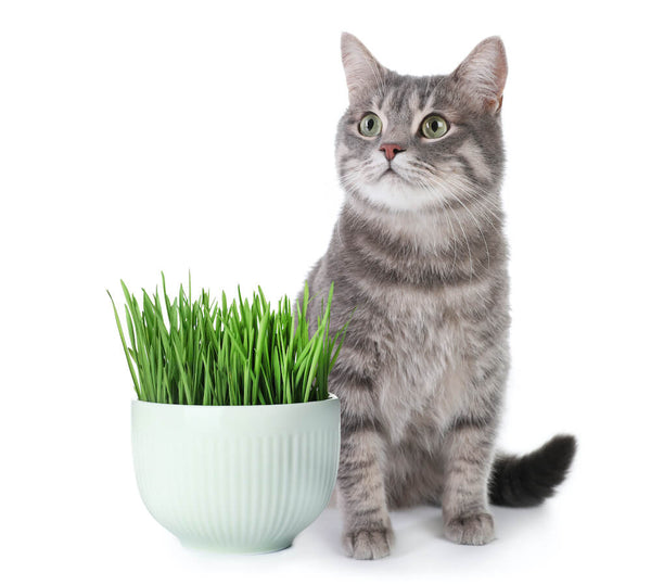 Green treats for cats