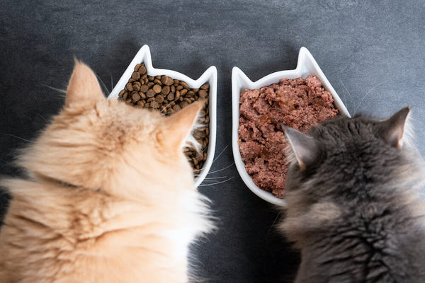 Dry Food vs. Canned Food