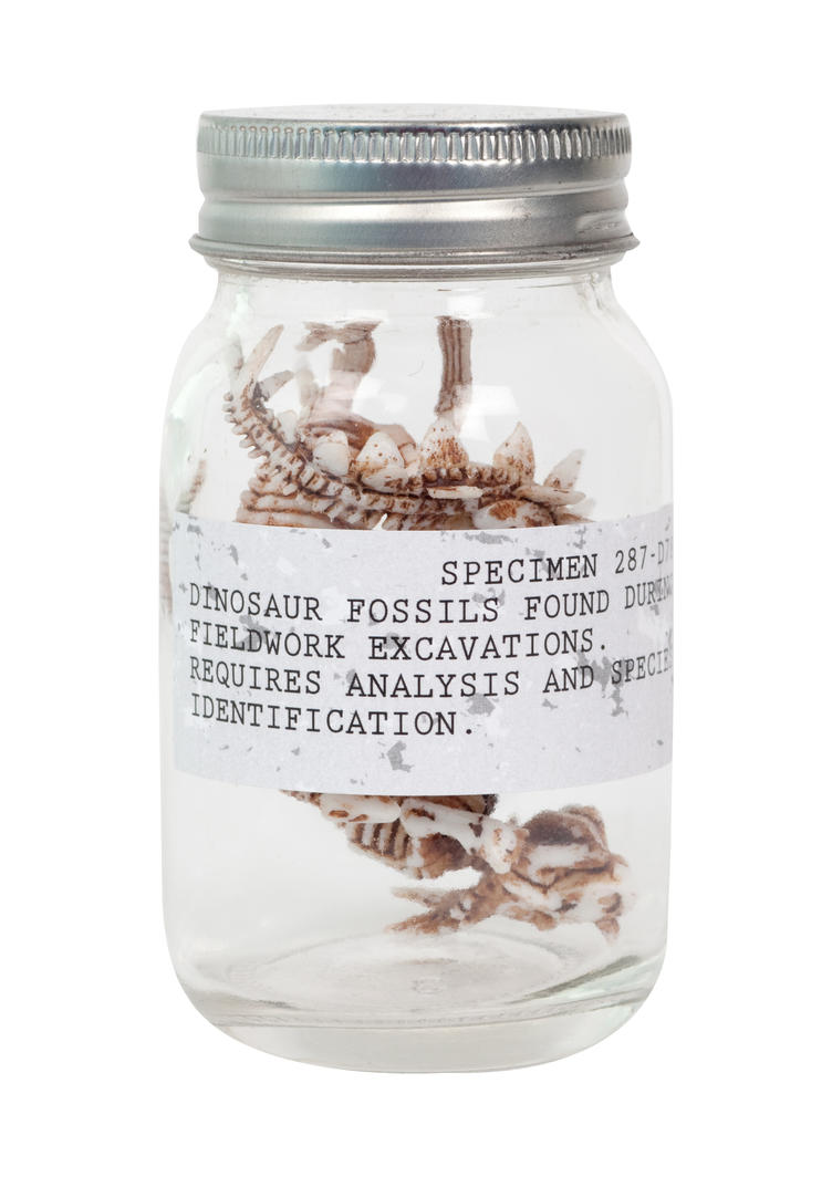 Dino Fossils in a Jar