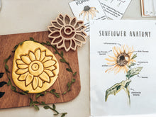 Load image into Gallery viewer, Sunflower Eco Cutter