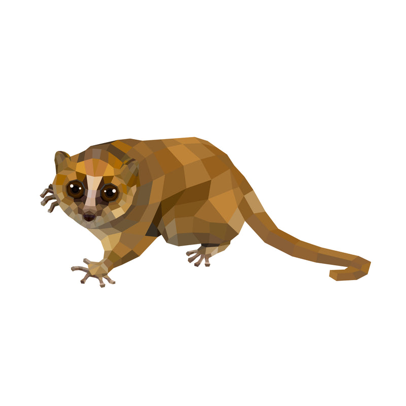 products/Jolly_s-mouse-lemur-01.jpg