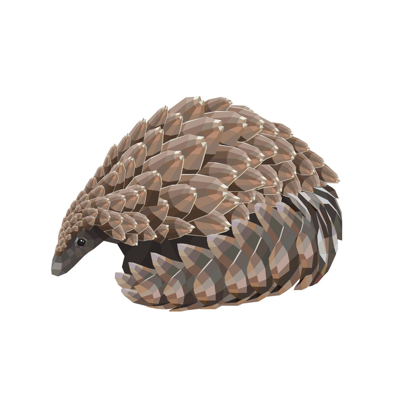 products/T-Ground-Pangolin-02.jpg