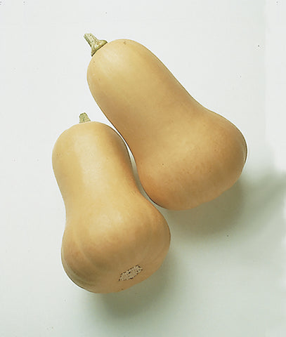Early Butternut Hybrid