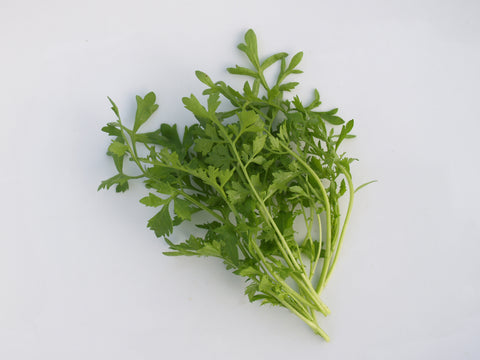 Garden Cress Peppergrass