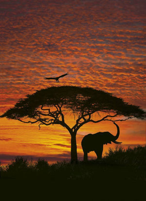 Komar African Sunset Fotobehang National Geographic 194x270cm | Yourdecoration.nl