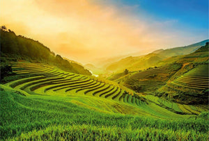 Wizard+Genius Terraced Rice Field In Vietnam Vlies Fotobehang 384x260cm 8-banen | Yourdecoration.nl