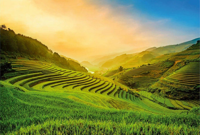 Wizard+Genius Terraced Rice Field In Vietnam Vlies Fotobehang 384x260cm 8-banen