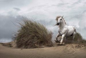 Wizard+Genius White Wild Horse Vlies Fotobehang 384x260cm 8-banen | Yourdecoration.nl