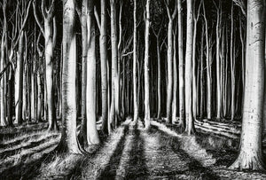 Wizard+Genius Ghost Forest Vlies Fotobehang 384x260cm 8-banen | Yourdecoration.nl
