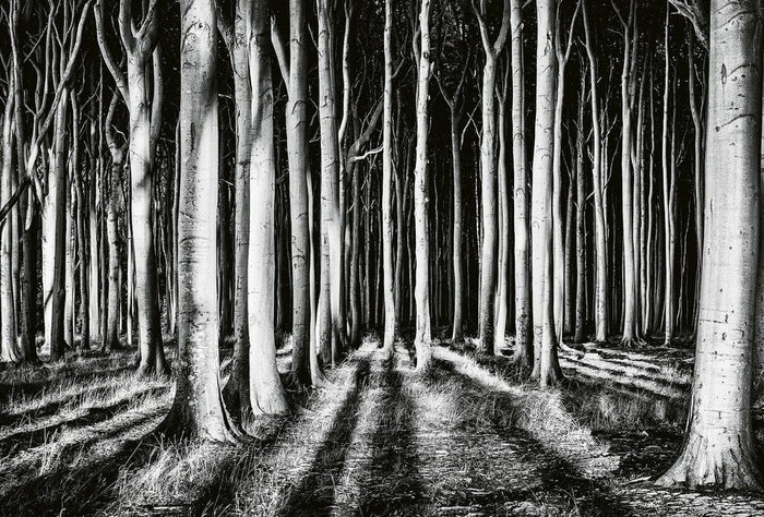 Wizard+Genius Ghost Forest Vlies Fotobehang 384x260cm 8-banen