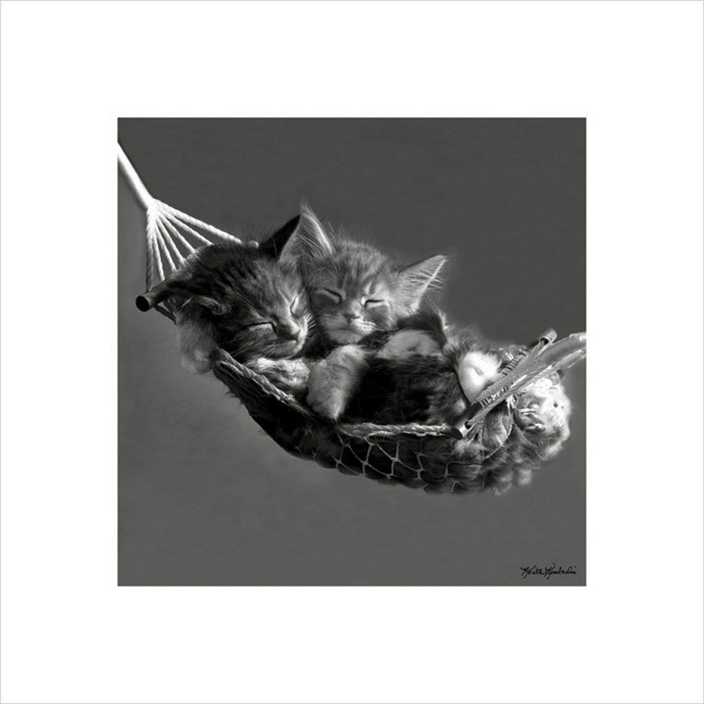 Pyramid Keith Kimberlin Kittens in a Hammock Kunstdruk 40x40cm