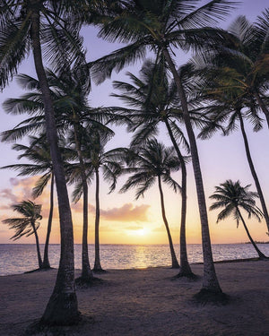Komar Palmtrees on Beach Vlies Fotobehang 200x250cm 2-banen | Yourdecoration.nl