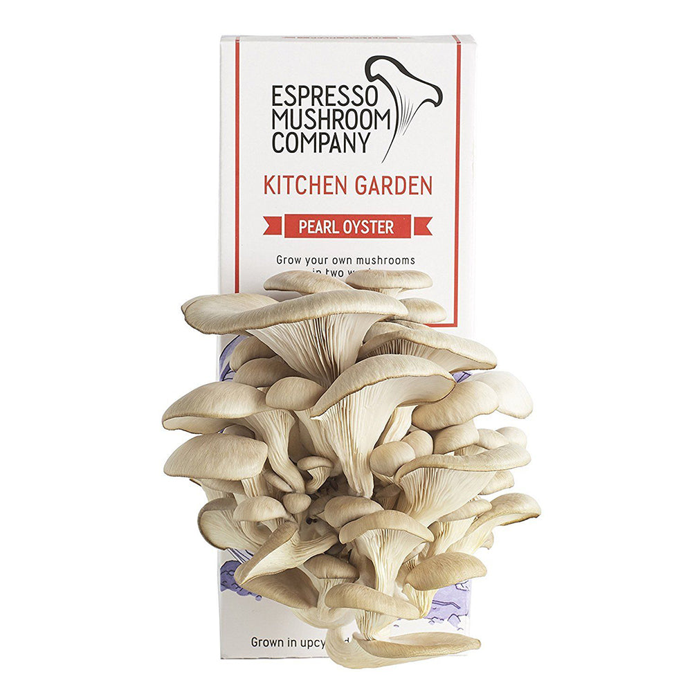 Pearl Oyster Mushroom Kitchen Garden Blooming