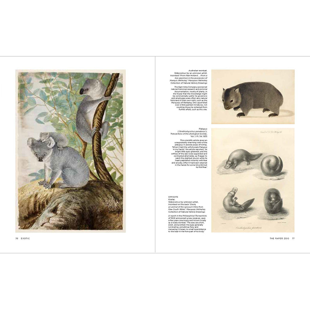The Paper Zoo: 500 years of Animals in Art Hardback British Library Inside Pages