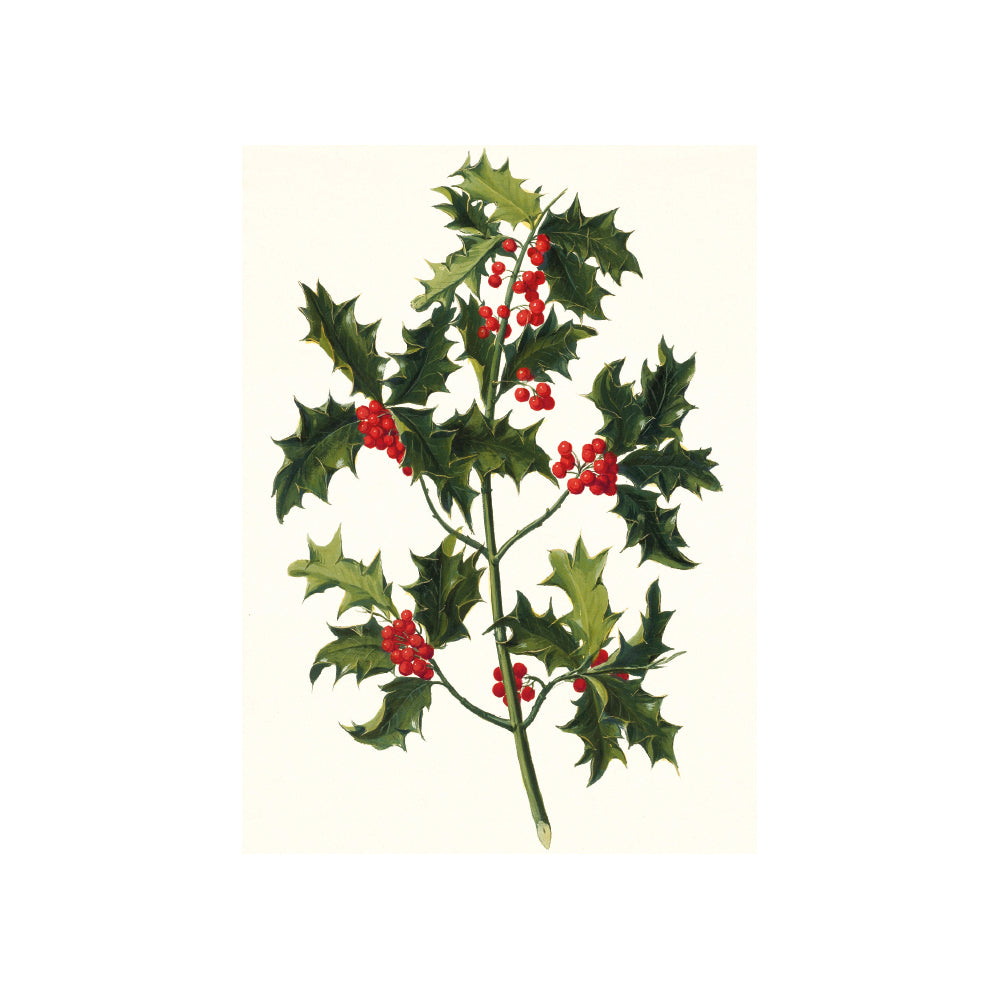 Sprig Of Holly Christmas Cards