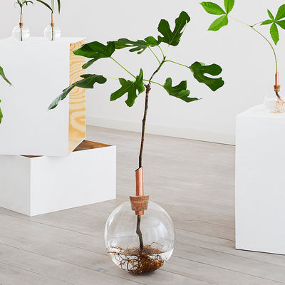 Glasilium Vase Large with small tree growing