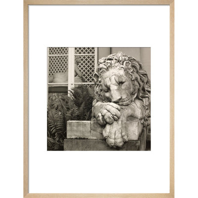 Chatsworth Lion print in natural frame