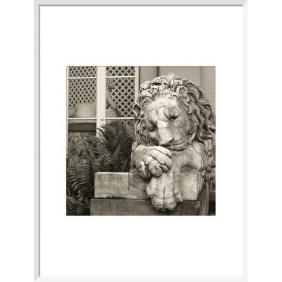 Chatsworth Lion print in white frame