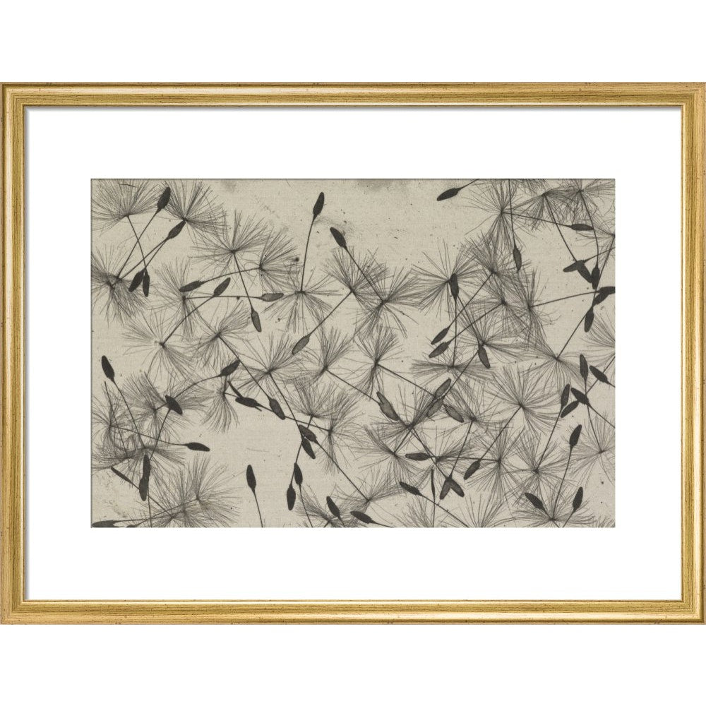 Dandelion Seeds print in gold frame