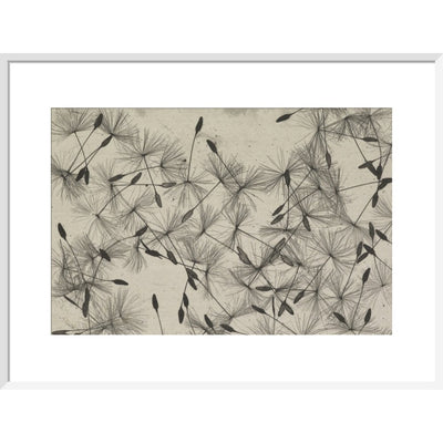 Dandelion Seeds print in white frame