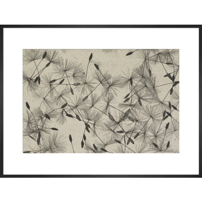 Dandelion Seeds print in black frame