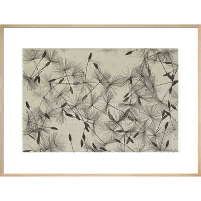 Dandelion Seeds print in natural frame
