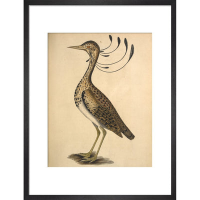 Florican print in black frame