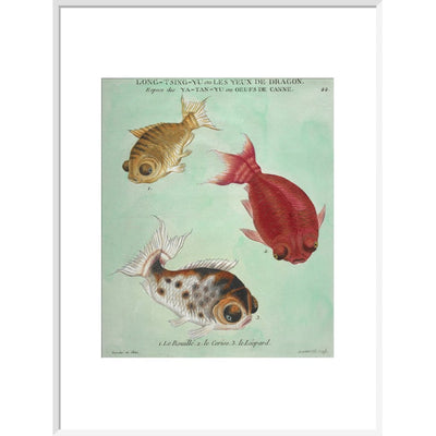 Long-Tsing-Yu trio of fish print in white frame