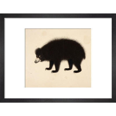 Sloth Bear print in black frame