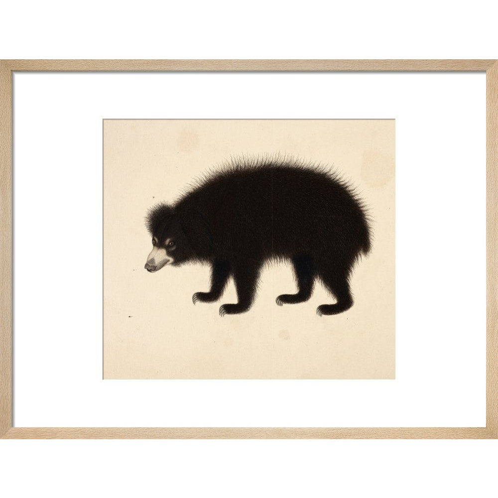 Sloth Bear print in natural frame