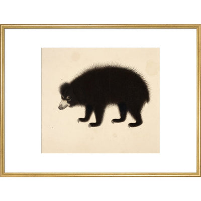 Sloth Bear print in gold frame
