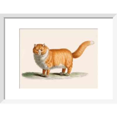 A ginger cat print in white frame