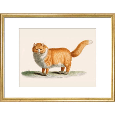 A ginger cat print in gold frame