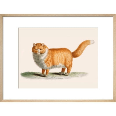 A ginger cat print in natural frame